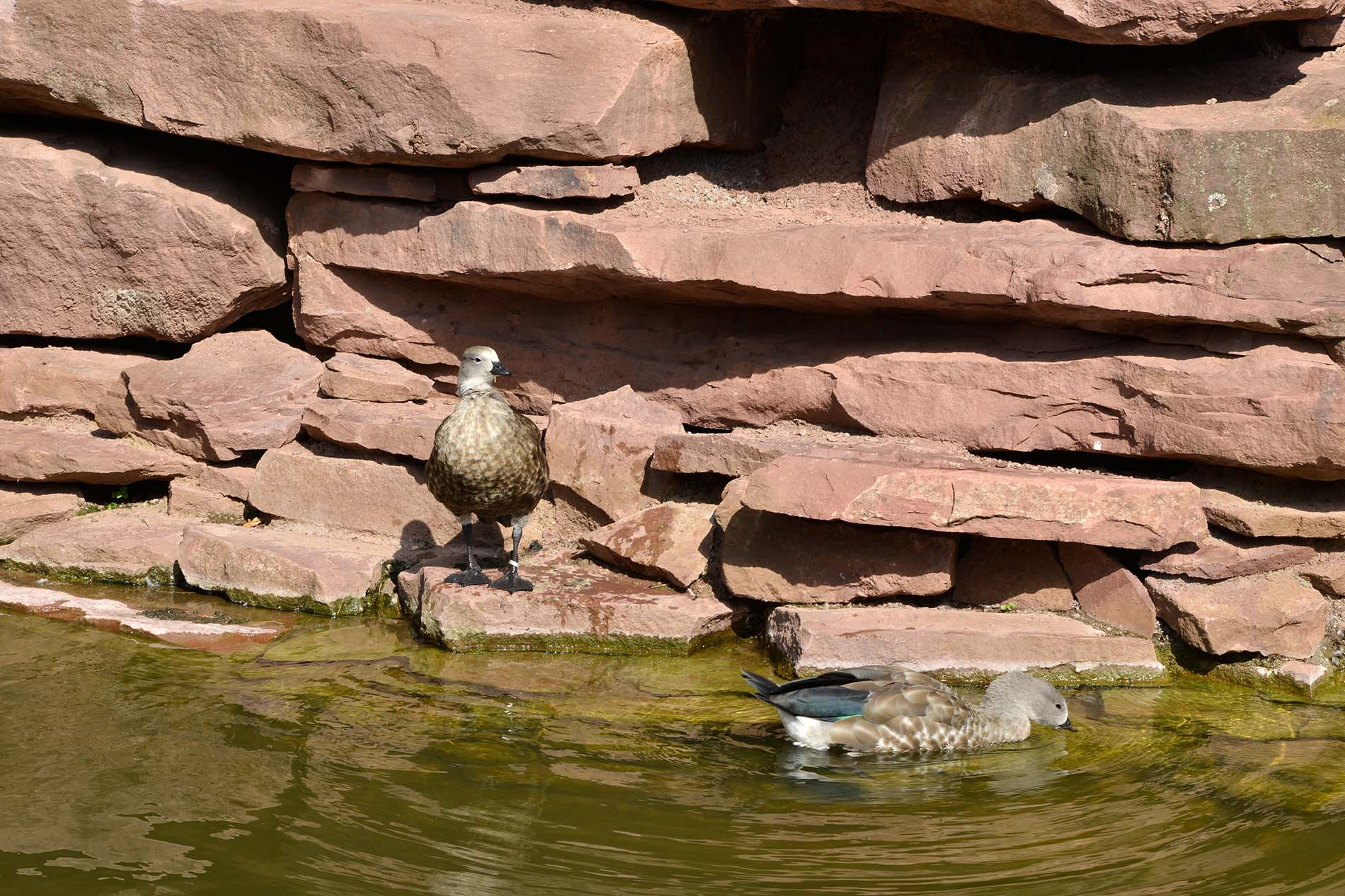 Zoo Magdeburg Findlinge Bruchsteine Tambacher Sandstein spaltrauh bruchrauh naturbelassen