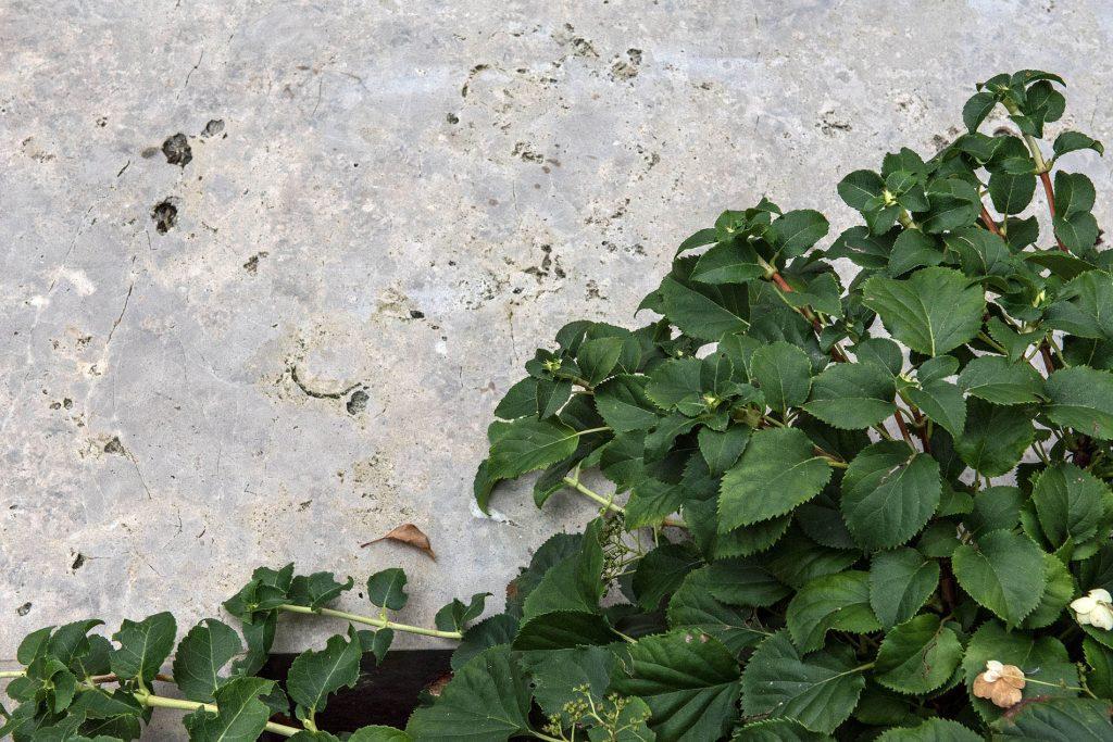 Gartengestaltung mit Limes Dolomit® von TRACO