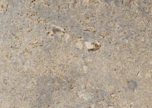 Muschelkalk Frostsicher kohlplatter muschelkalk
