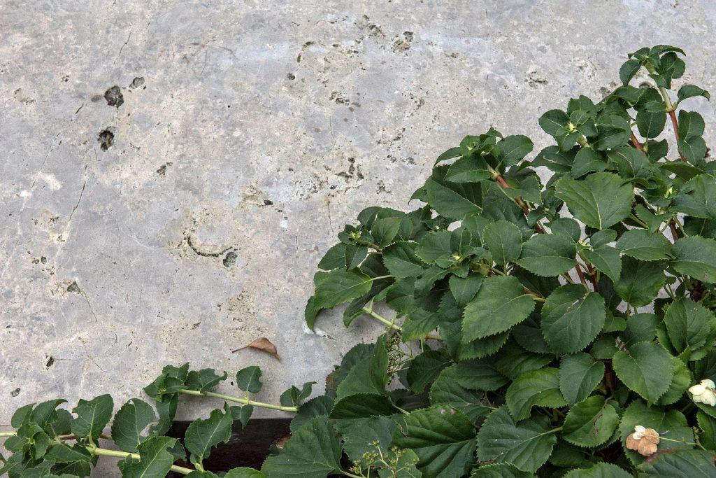 Limes Dolomit® Garten mit TRACO Naturstein Bodenplatten
