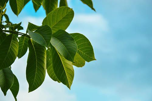 die ökologischen Vorteile der Verwendung von Naturstein